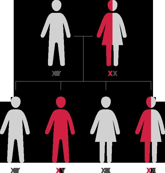Hemophilia Carrier Testing | Steps for Living