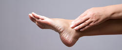 Meet the Joint: Ankle